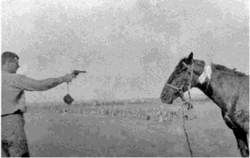 A NZ Mounted Rifles trooper using his .455 Webley revolver ending the life of an injured loyal companion
